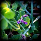 wild flowers 3 by karolina
