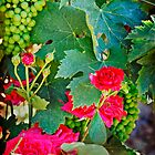 Grapes and Roses by Lynnette Peizer