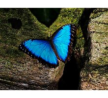 Butterfly Extraordinaire  Photographic Print
