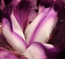 Marvellous Iris by karina5