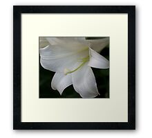 *** PURITY OF HEART ~ EASTER LILY *** Framed Print