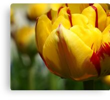 *** BEAUTIFUL EYES ~ YELLOW RED TULIP*** Canvas Print