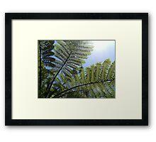 Ferns Across a Blue Sky Framed Print
