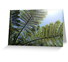 Ferns Across a Blue Sky Greeting Card