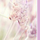 Lavender by Eliza1Anna