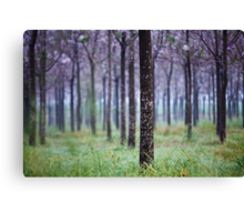 lines of trees  Canvas Print