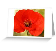 ***  PASSIONATE COURAGE ~ POPPY PAPAVER*** Greeting Card