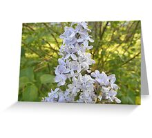 Lilac Flower In Spring Greeting Card