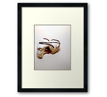 The Royal Donut: Delicious Framed Print