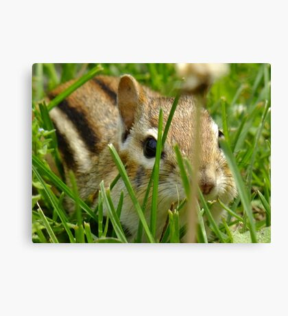 Sniff, Sniff...OK Hand Over The Peanuts! Canvas Print