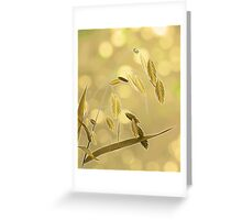 Sunlight Kisses Greeting Card