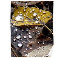 Autumn raindrops Poster