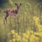 Among the scotch broom and daisies  by Joshua Greiner