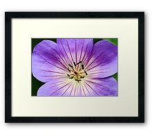 Perennial Geranium Flower Macro Framed Print