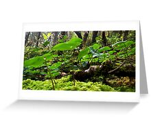 Forest canopy II Greeting Card