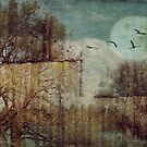Rustic Moon  by Lynda Heins
