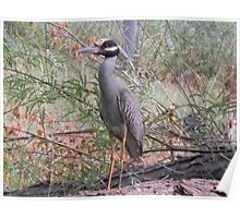 Angry Bird - Night Heron Poster