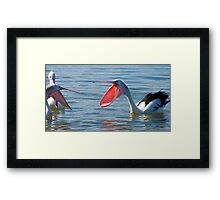 Pelicans & Married Life Framed Print