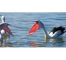 Pelicans & Married Life Photographic Print