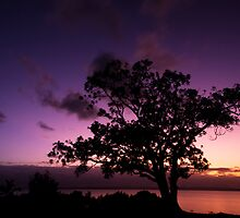The Fig Tree by Ian  Clark