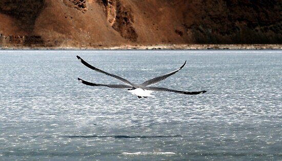 A New Species of Bird? by Vivek Bakshi