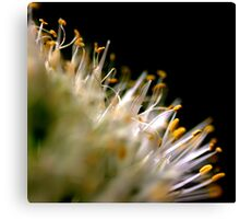 Up Close and Personal with a Spring Onion............... Canvas Print