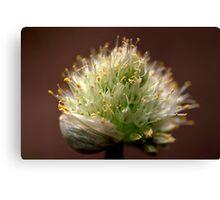 A Spring Onion.... HEAD! Canvas Print