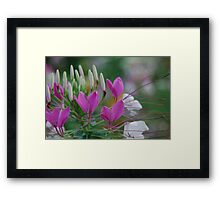 Cat Whiskers  Framed Print