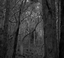 Scary Trees- Lobethal Bushland by Ben Loveday