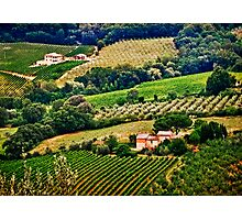Vineyards and Olive Orchards Photographic Print
