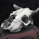 Cow Skull Study by Veda Sword