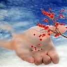 Next Generation Poppies by Rozalia Toth