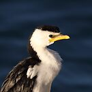 Little Pied Cormorant ... Up Close by Kerryn Ryan, Mosaic Avenues