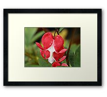 Red Bleeding Heart Flowers Framed Print