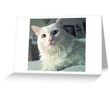 You wanted something? Greeting Card