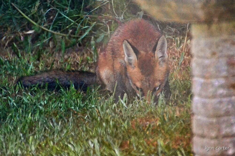 A  New Garden Visitor by lynn carter