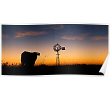 Fixated Cow  Poster