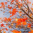 Bright Orange Autumn by kahoutek24