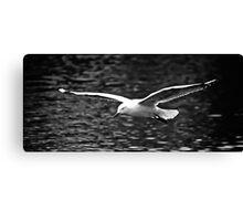 Seagull in full flight Canvas Print
