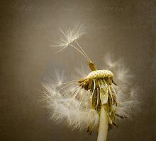 Dandelion by Ian Barber