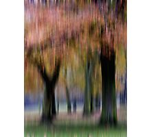 Group of Trees in Motion Photographic Print