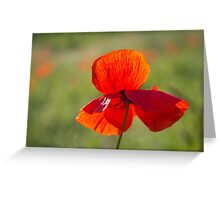 Poppy Butterfly Greeting Card