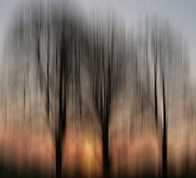 Three Trees in the Morning Light by KUJO-Photo