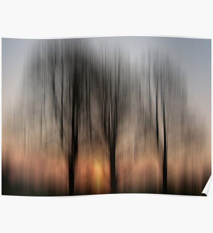 Three Trees in the Morning Light Poster