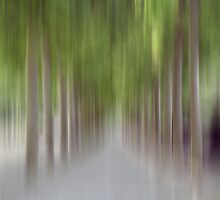 Avenue of Trees in Motion, Brussels by KUJO-Photo