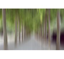 Avenue of Trees in Motion, Brussels Photographic Print