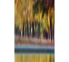 Trees in Motion Photographic Print
