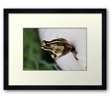 Southern Brown Tree Frog Framed Print