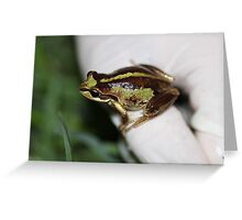 Southern Brown Tree Frog Greeting Card