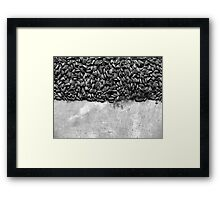 Sunflowers by Ai Weiwei Framed Print